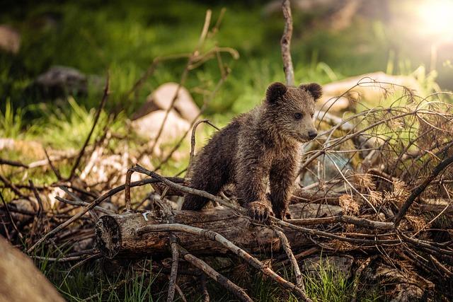 Le mindset de l'ourson